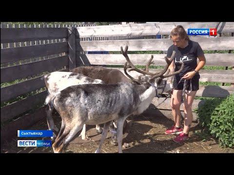 Жителей Сыктывкара просят собрать грибы для оленей