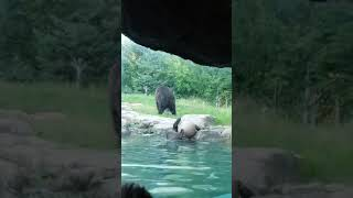 Bear finally manages to retrieve its toy ball - 1059318