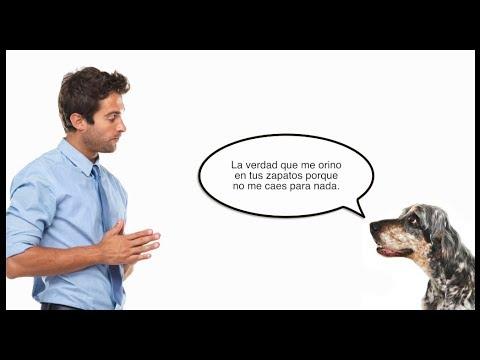 ¿Podremos algún día hablar con otros animales?