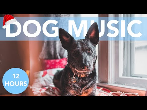 HAPPY CHRISTMAS DOG MUSIC! Calming Tunes to Chill Your Dog!