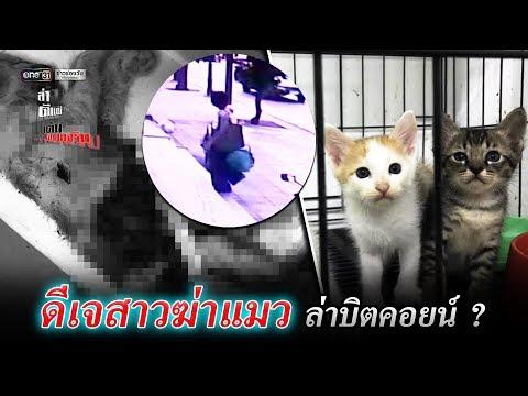 ดีเจสาวฆ่าแมว ล่าบิตคอยน์ ? | ล่า ตีแผ่ เค้นความจริง | ข่าวช่องวัน | one31