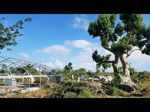 Garden Pool Global - Current Progress With Hurricane Recovery in Barbuda
