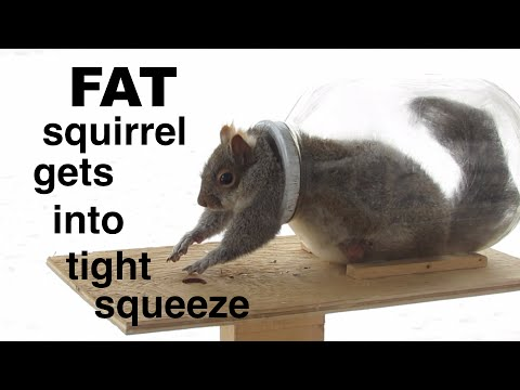 Squirrel ● literally ● bites off more than he can chew ! - UCrnCSQJB4c1_rOKJRzSZemg