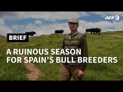 In Spain, virus deals deathblow to bullfighting season | AFP photo