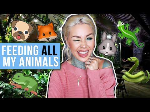 Feeding ALL My Pets in One Video  - UCycTo-06chgRt8N3aiK788A