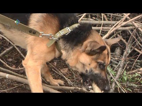 В последнее время участились случаи жестокого обращения с животными