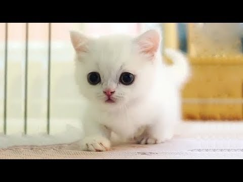 Cats and Cute Kittens overload Compilation 2018 - UCq5hgY37WAryZCwmehDyCaQ