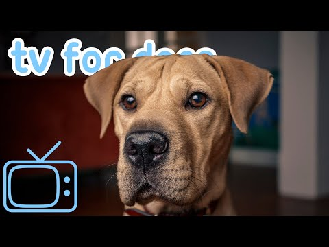 The ULTIMATE Dog TV! Entertainment for Bored Dogs with Music! NEW 2020