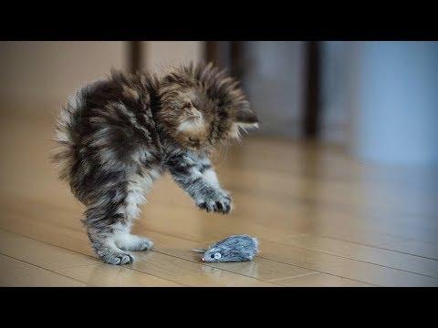 Funny Kittens 🐱😺 Funny Playful Kittens (Full) [Funny Pets] - UCeZe0VwwhEf8KTI2FHfJtTg