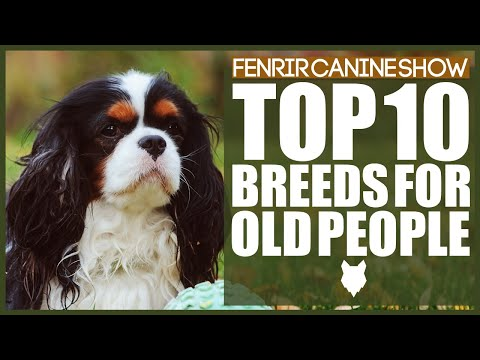 The PERFECT DOG BREEDS For OLDER PEOPLE. MY TOP 10