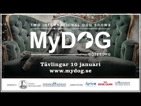 MyDOG: Tävlingar 10 januari 2016