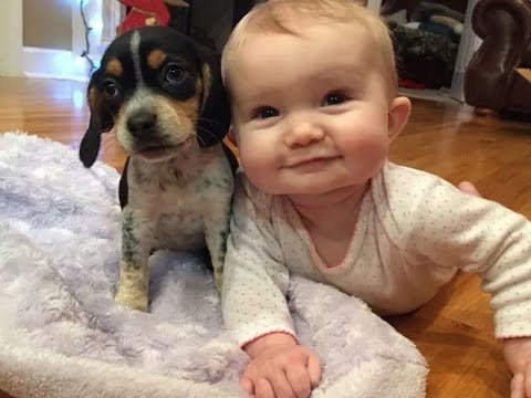 funny Babies and Puppies Playing Together Compilation 2016 , best babies vs dogs animals 2016 - UCHm3_lyl95YG2LhEYBX0aUw