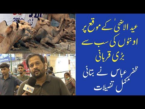 JDC Foundation Karachi Qurbani 2021 | Camel Qurbani | Zafar Abbas Interview
