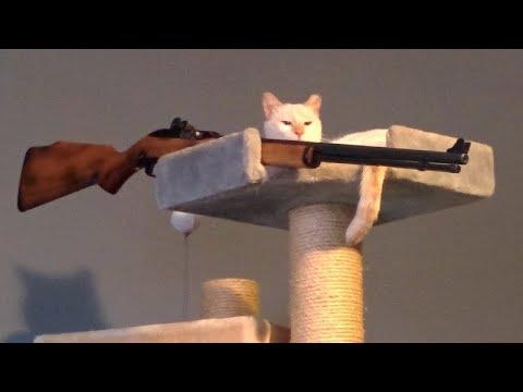 PEE YOURSELF FROM LAUGHING - Super FUNNY ANIMAL compilation - UCKy3MG7_If9KlVuvw3rPMfw
