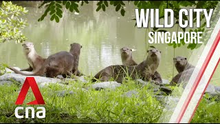 Singapore's Hidden Wildlife | Wild City | Full Episode