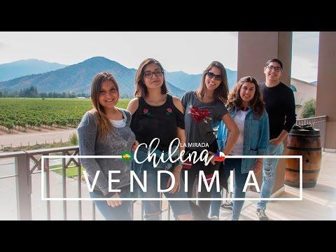 Festa da Vendimia (Colheita de Uvas) | La Mirada Chilena - 3ª temp.
