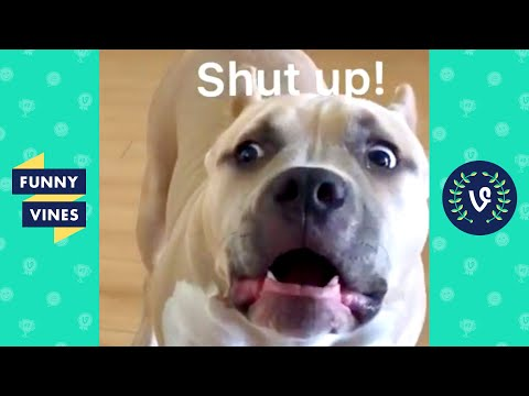 TRY NOT TO LAUGH - Funny Animals Videos!