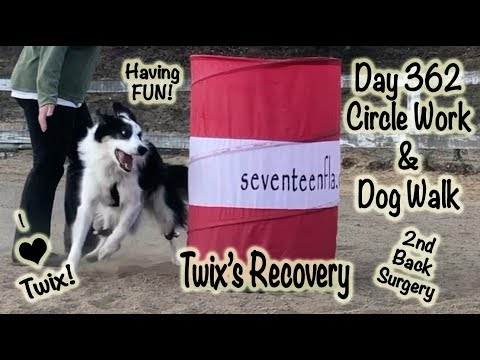 Day 362:  Barrel & Dog walk - 2nd Herniated Disc Surgery Recovery