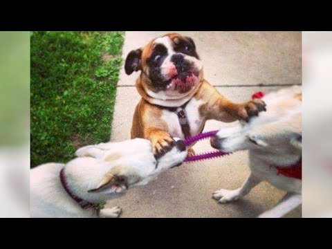 FUNNY and CRAZY DOGS just never fail to AMUSE US!