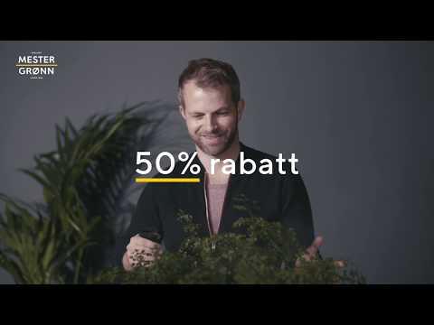 Klikk og hent grønne planter til 50%