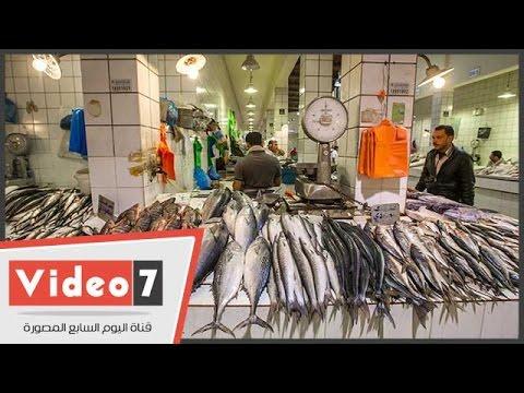 """التجار: إيقاف التصدير خفض سعر السمك و""""دى بشرة خير"""