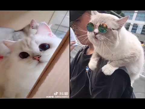 Best FUNNY CAT Videos #1 | Cats TV