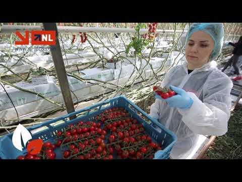 Praca w Holandii dla agencji NL Jobs photo