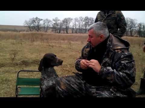 Ukrainian Dog Fetches Vodka