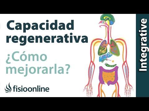 Cómo mejorar tu capacidad regenerativa desintoxicando tu cuerpo