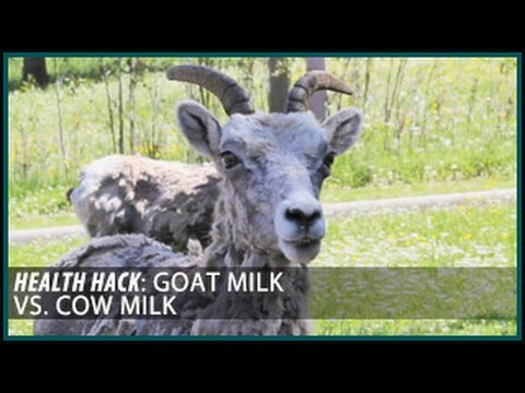 Goat Milk vs. Cow Milk: Health Hacks- Thomas DeLauer