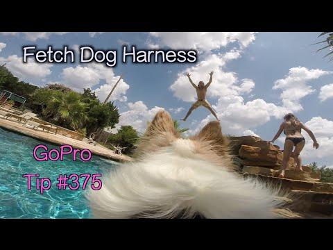 GoPro Fetch Dog Harness - GoPro Tip #375 - UCTs-d2DgyuJVRICivxe2Ktg