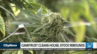 Business report: Canntrust stock rebounds after CEO fired
