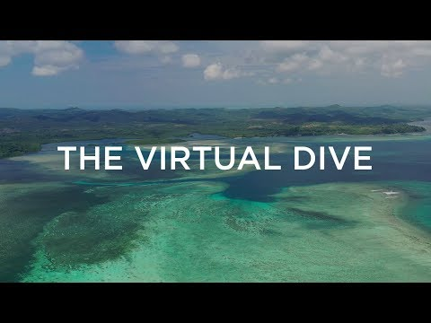 Saving the World's Coral Reefs, One Virtual Dive at a Time - UCpvg0uZH-oxmCagOWJo9p9g