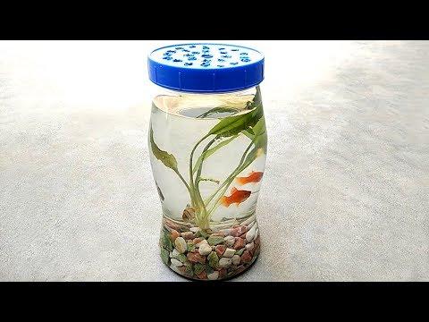 Bottle aquarium | Mini aquarium and aquarium fish - UCXXq0jk9-22hDAYL2GgL6Wg