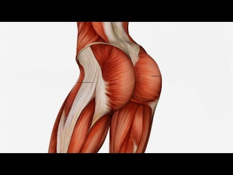 7  Exercises To Get That Perfect Round Butt In Just A Month - UC9N9JYi-5Qet9IM_QNd-WQQ
