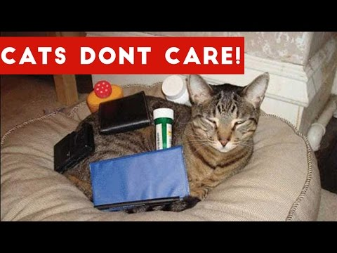 Cats Don't Care Funny Pets Videos | Best Funny Cat Videos Ever - UCYK1TyKyMxyDQU8c6zF8ltg
