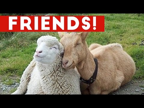 Funniest Unlikely Animal Friendships Compilation   Funny Pet Videos - UCYK1TyKyMxyDQU8c6zF8ltg