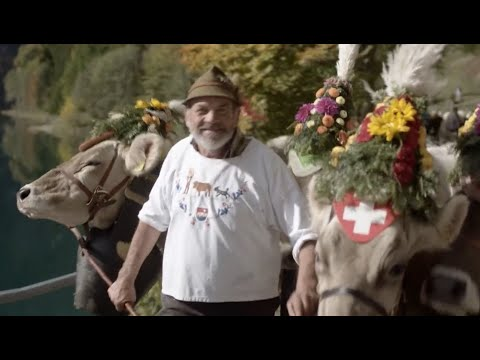 Canton Schwyz Tourism and Swiss Traditions - UCXnIQrzOwgddYqQ3pyf0AnQ