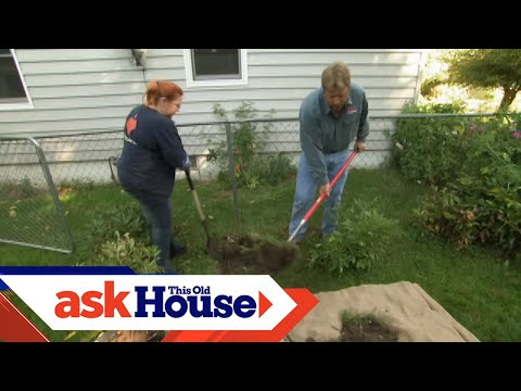 How to Transplant a Rose Bush | Ask This Old House - UCUtWNBWbFL9We-cdXkiAuJA