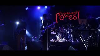 Fluorescent Forest live aftermovie - fluorescen_tforest , Ambient