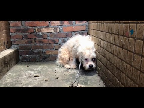Homeless dog rescue video and help a stray dog back to the world again
