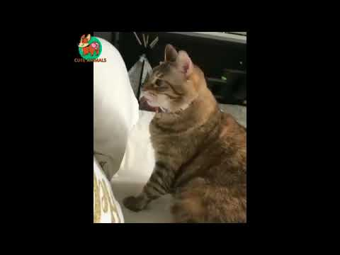 Awesome Funny Animals' Life Videos
