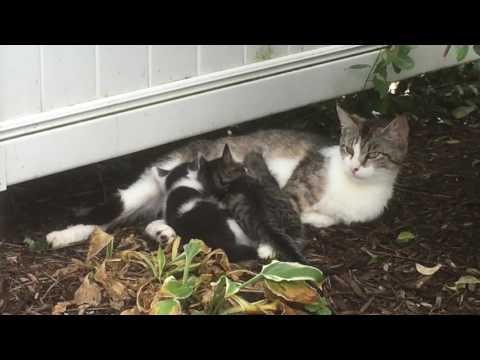 Mommy Cat And Her Cute Kittens: Feeding Time - UCRRi9jT43EehTp16gK2e-KQ
