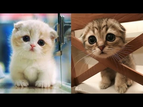 Baby Cats - Cute and Funny Cat Videos Compilation #8 | Aww Animals - UC8hC-augAnujJeprhjI0YkA
