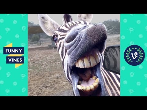 TRY NOT TO LAUGH - BAD DAY?? WATCH THESE FUNNY ANIMALS! - UCd07rKJ7Q0pg5ths7Pz8k8Q
