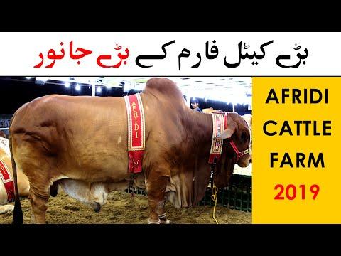 Afridi Cattle Farm 2019 - Sohrab Goth Cow Mandi Karachi