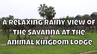 A Relaxing Rainy View of the Savanna at the Animal Kingdom Lodge
