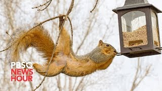 Why city squirrels can get a little too friendly