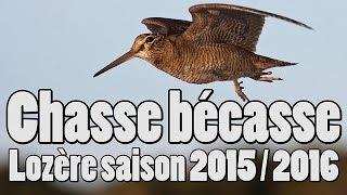 Chasse bécasse en Lozère saison 2015 /2016