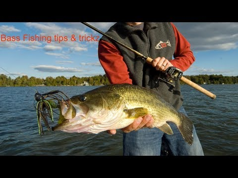 kickin their bass tv-How to bass fishing in the pond||Bass fishing tips and trickz